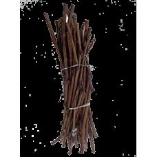 Черенок сорта Лора (Флора)